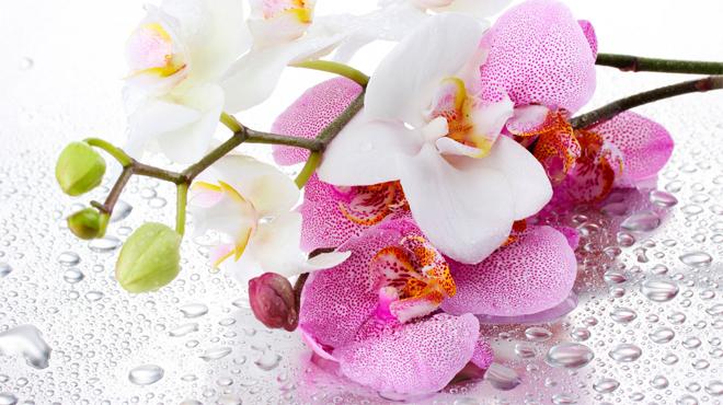 Красивая орхидея на каплях воды