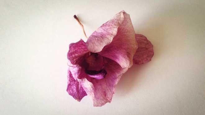 Опавший цветок орхидеи