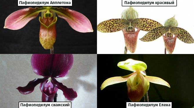 Орхидеи из Вьетнама виды