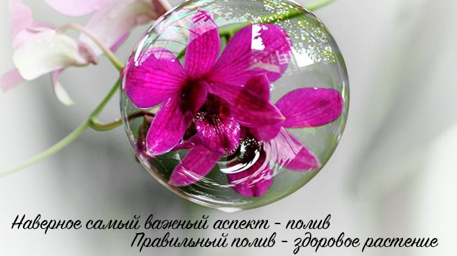 Цветок в капле воды