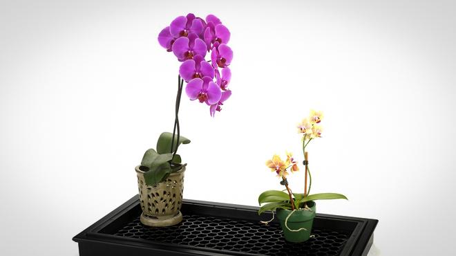 Полив орхидеи через поддон