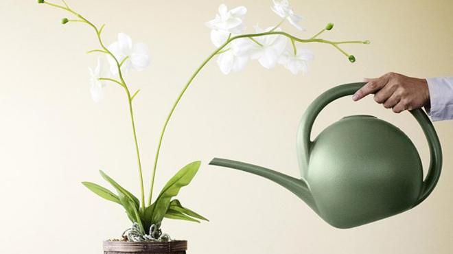 Поливаем правильно орхидеи