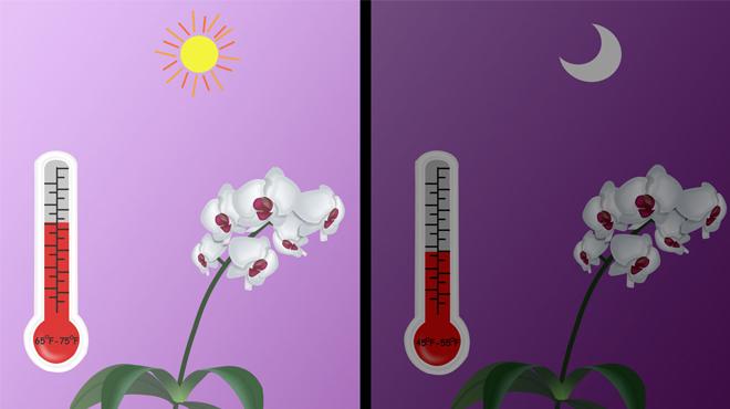 Температурные режимы для орхидеи