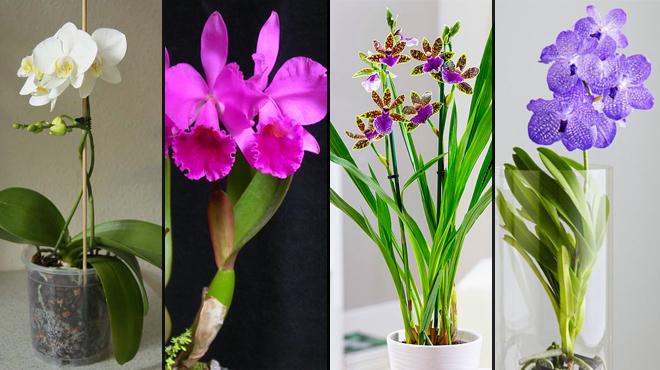 Виды для выращивания
