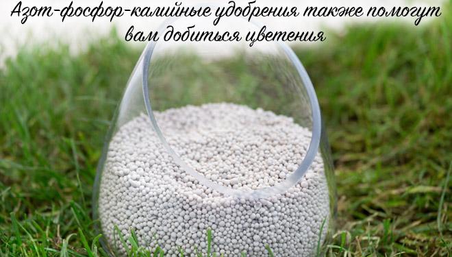 Азот-фосфат в банке