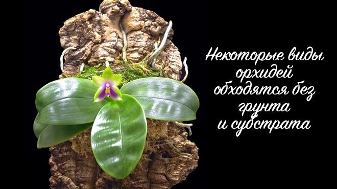 Орхидея без субстрата и грунта