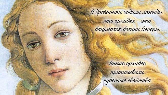 Богиня Венеры
