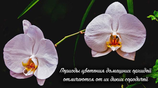 Разное цветение