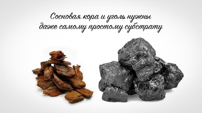 Кора и древесный уголь