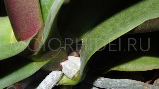 Корни отрывают лист цветка
