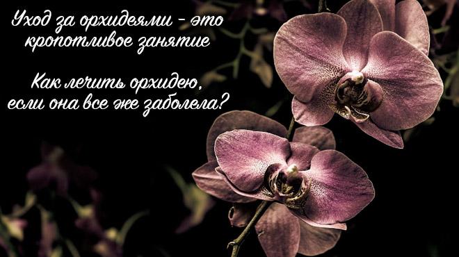 Орхидея на черном фоне красная