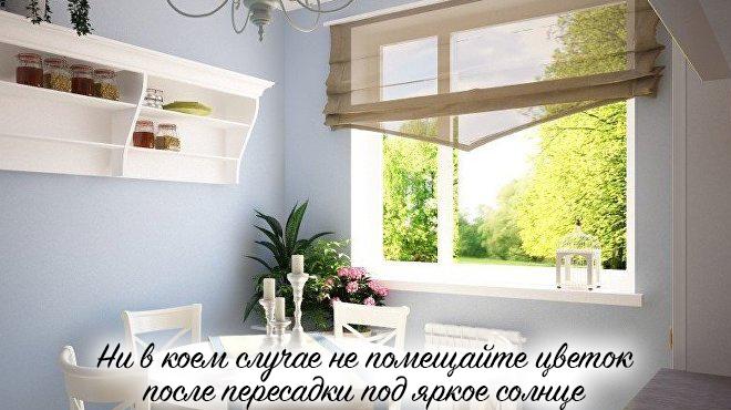Большое окно и цветок