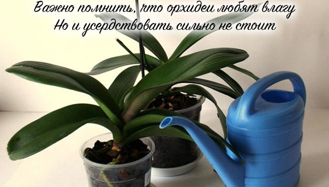 Орхидеи и емкость для полива