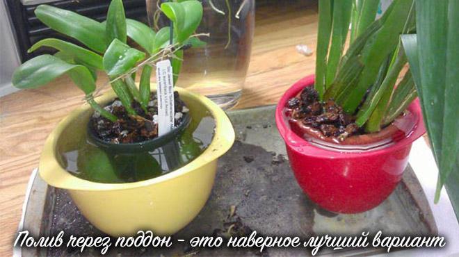 Метод полива цветка через поддон