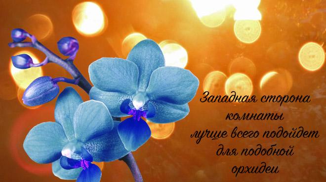Синяя орхидея и свет