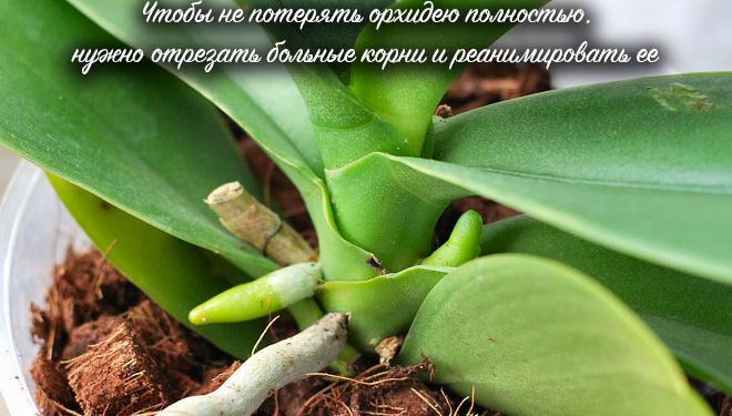 Корни и листья