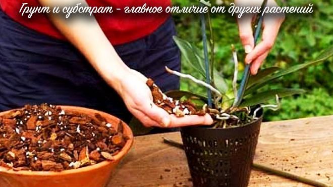 Субстрат и грунт для орхидей