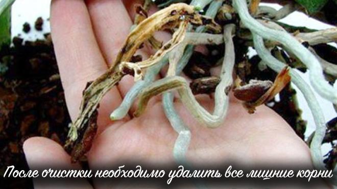 Удаление лишних корней