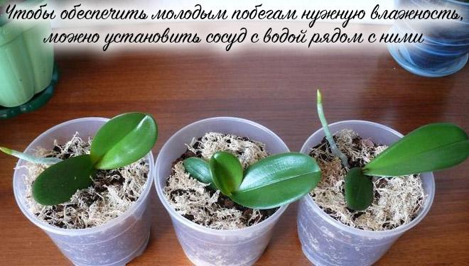 Молодые орхидеи