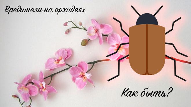 Вредители орхидей
