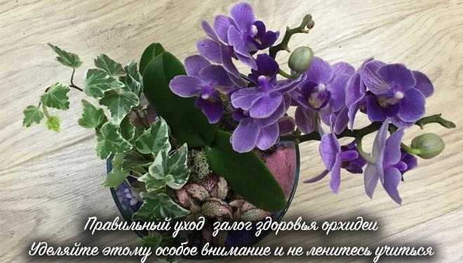 Здоровый цветущий цветок