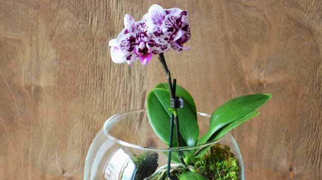 Орхидея в стекле