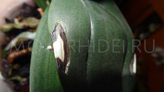 Черное белое пятно на листе