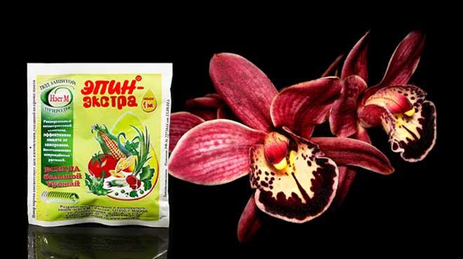 Эпин и орхидея