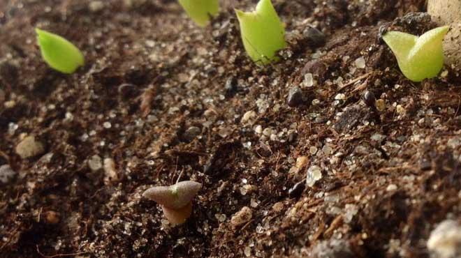Грунт для кактусов для посева