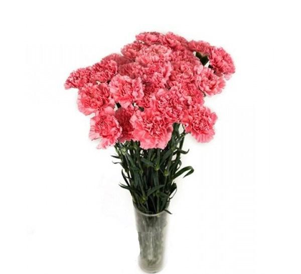 Букет гвоздик галерея спб, живые цветы