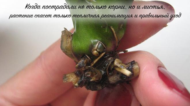 Нет корней у цветка