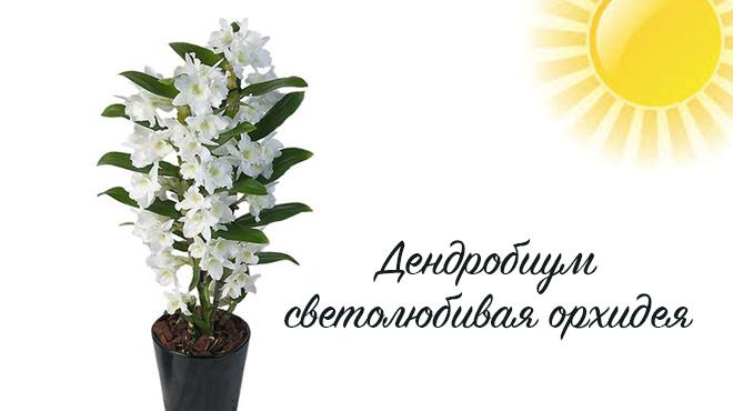 Солнце и цветок