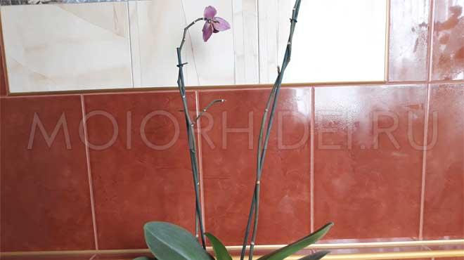 Завял последний цветок орхидеи