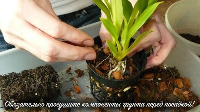 Пересадка цветка в горшке