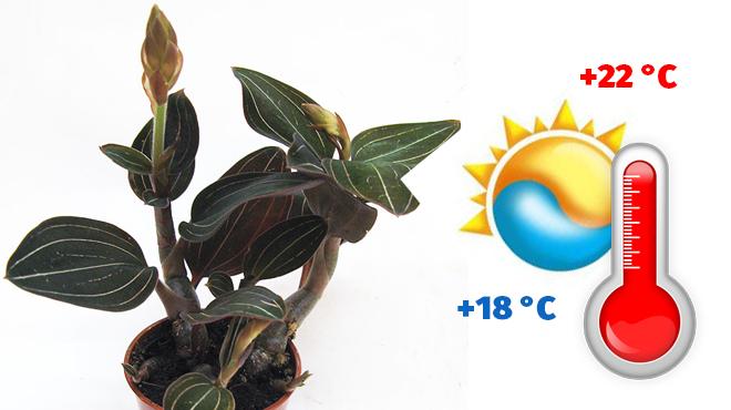 Температурный режим для Лудизии