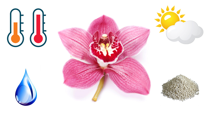 Условия для выращивания орхидеи
