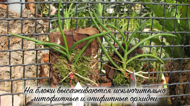 Орхидеи на блоке