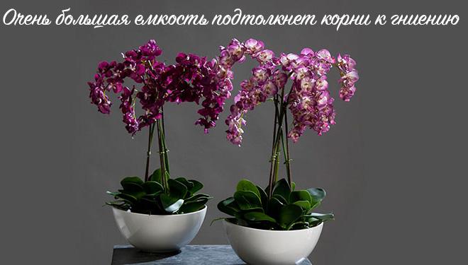 Орхидеи в белых горшках