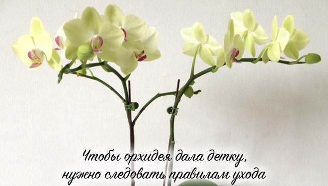 Две цветущие ветки