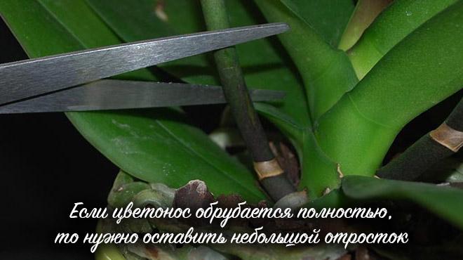 Обрезка ножницами
