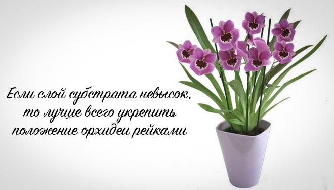 Укрепление орхидеи рейками