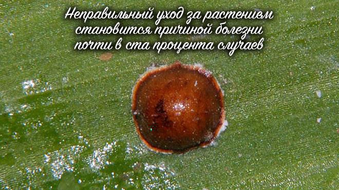Вредитель на листьях