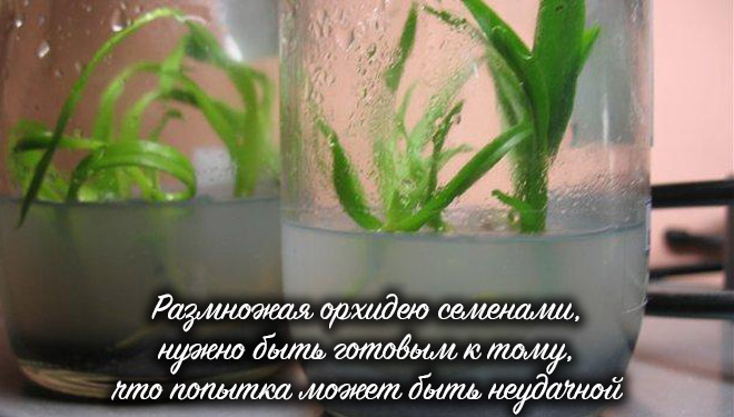 Выход семян