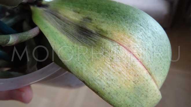 Больной лист цветка