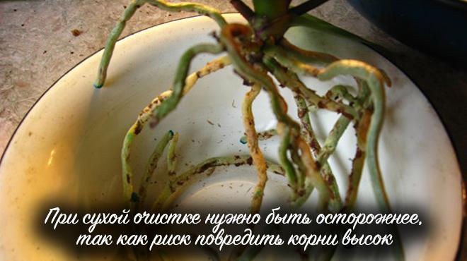 Сухая очистка корней