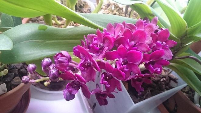 Прекрасная цветущая орхидея