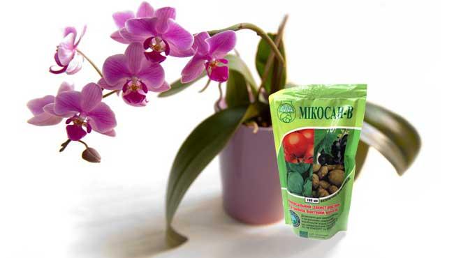 Фунгицид и орхидея