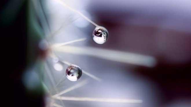 Капли воды на иголках кактуса