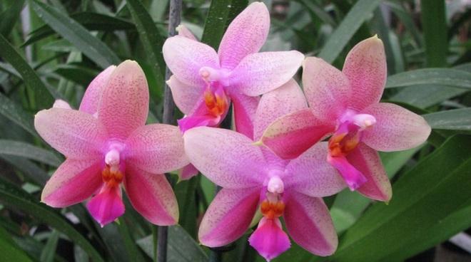 Цветы Лиодоро