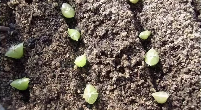 Кактусы из семян выросли